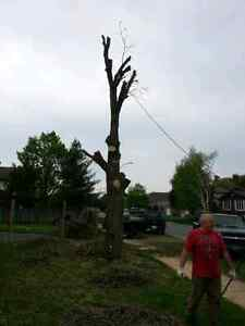 Doulton tree service Kingston Kingston Area image 2