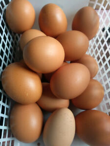 Eggs from organically fed Chickens