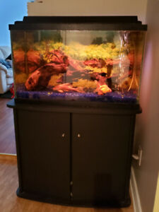 Fish tank/aquarium with stand (all included)