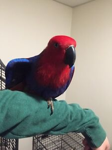 Beautiful parrots looking for new homes