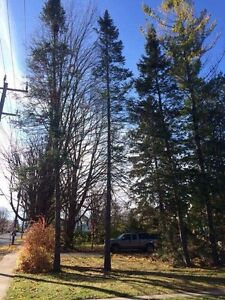 Affordable tree service  Peterborough Peterborough Area image 1
