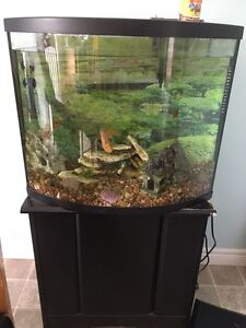 Bow Front Aquarium Adopt Or Rehome Pets In Ontario