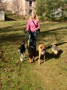 Experienced Dog Walker Accepting New Clients!