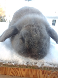 Rabbits for sale various prices