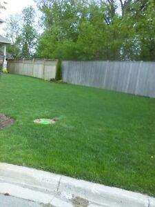 Aerate and or Dethatch services for your lawn Kitchener / Waterloo Kitchener Area image 1