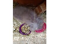 Bunnies for re homing