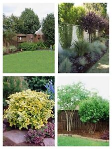 WANTED: Trees / Shrubs / Flowers