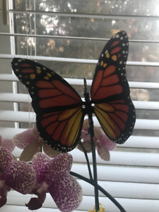 Beautiful Animated Monarch Butterfly!