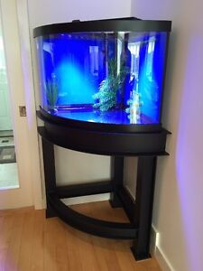 Aquarium: 54-gallon corner tank with a custom steel stand