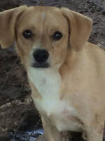 RAZOR - Foster & Forever Home Needed!!! ***AVAILABLE***