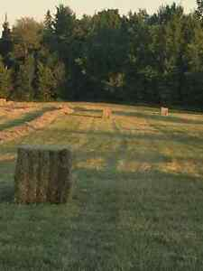 Hay for sale 2nd cut large square bales.