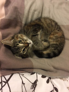 Female kitten in need of a new home