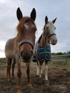 Project/Green Large Pony Mare