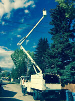 Tree Removal and Concrete Service