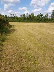 40 Acres on County Road 6, 10 minutes to Cat Centre Kingston Kingston Area image 6