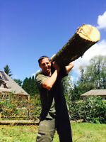 Tree and Lawn Maintenance.  Tree, & Stump removal and More