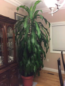 In House Plant For Sale