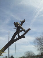 Looking for Experienced Arborist (or willing to learn)