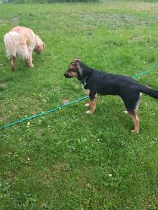 Mixed breed 5 month old puppy
