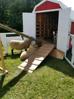 Mobile petting farm for birthdays and events!!