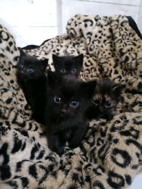 Kittens. Ready to go.