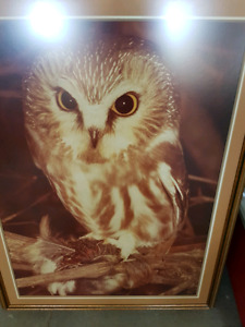 ORIGINAL OWL PHOTOGRAPH BY COMMERCIAL ARTIST