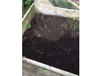 Free compost/ top soil also lots of mint