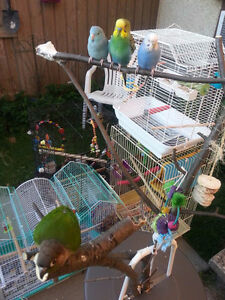 Sweet home for any unwanted or free birds