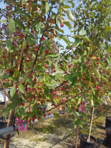 Trees & Fruit Trees - 15% OFF