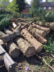 Fire Wood, Timber, Wood Logs, Free to Collect