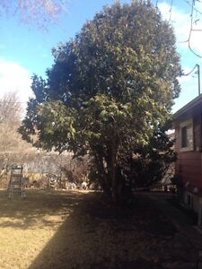 Anytime Tree Removal Moose Jaw Regina Area image 4