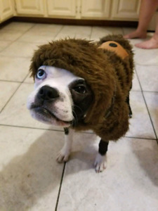 Doggy Star wars Halloween costumes pour chien