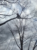 10% off Competitors Quotes! Pruning and Tree Removal