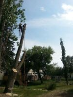Bushwacker Tree Experts ~ Your Arbor Care Professionals ~