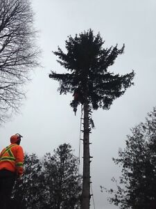 Tree trimming and removal services  London Ontario image 3