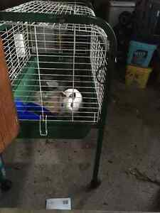 Cute small bunny with cage and accessories