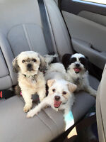 Pet sitting in Airdrie