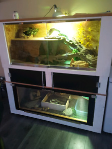 Custom lizard enclosure with male and female water dragons