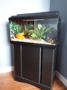 Fish tank with stand, filter, decor and water solutions.
