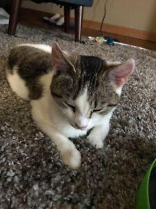 Free- male older kitten