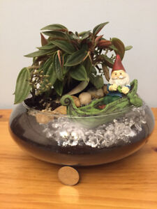 New terrarium with easy to care for plant