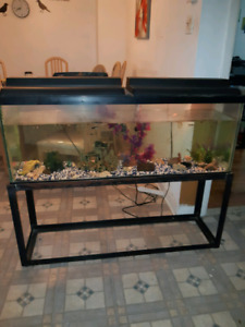 Aquarium 60 gallon