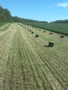Square hay bale for sale
