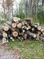 Winter's Coming! Firewood for Sale