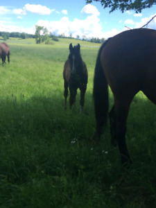 Broodmare and Young Horse Board packages