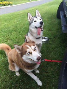 Looking for rental for two dogs