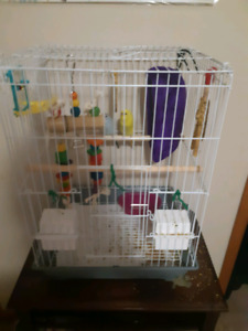 2 beautiful budgie birds, cage,toys & accessories