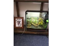 WANT FISH TANKS FOR BREEDING PROJECT