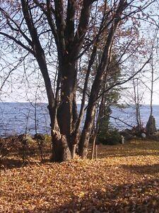Bord de l'eau dans l'Anse de Roberval Lac-Saint-Jean Saguenay-Lac-Saint-Jean image 2
