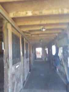 Horses Boarded, Western riding lessons